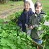 Bild zum Weblog Unsere Ernte