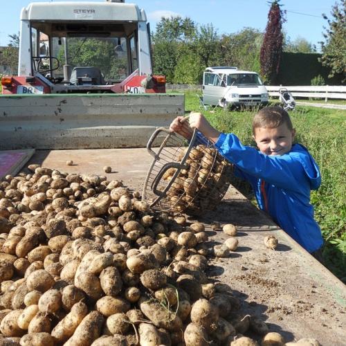 Bild zum Weblog Kartoffelprojekt