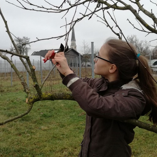 Bild zum Weblog Auch Bäume müssen frisiert werden!