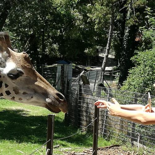 Bild zum Weblog Im Zoo - da gibt es was zu sehen!