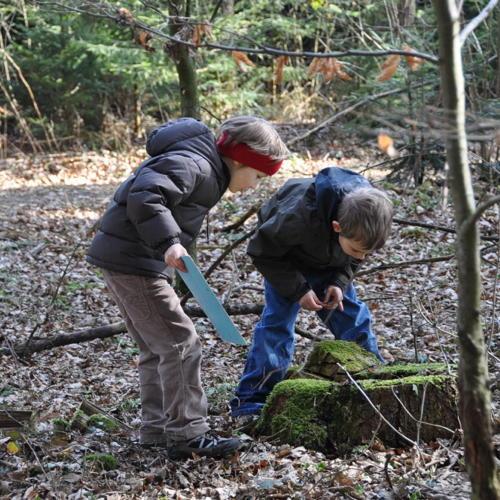 Bild zum Weblog Den Wald kennenlernen ...